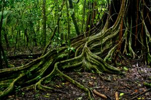 Where can you trace your roots to?