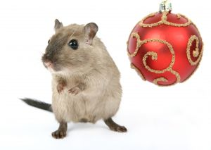 'Twas the night before Christmas and all through the house, not a creature was stirring, not even a mouse...""