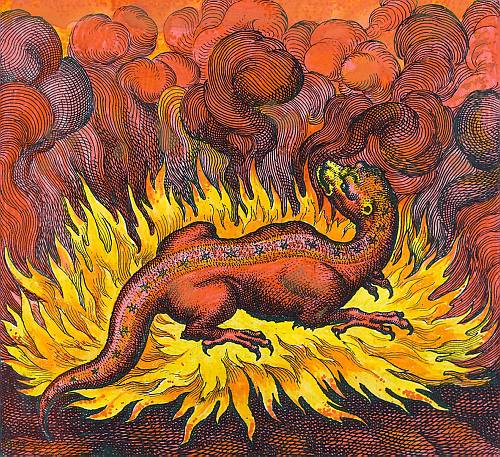 The salamander was believed to live in fire
